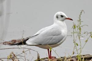 Seagull standing on lake edge near tiny plants
