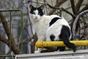 White and black cat sitting on concrete fence near a gas pipe