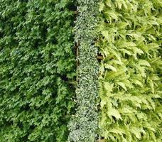 Green plant vertical wall photo