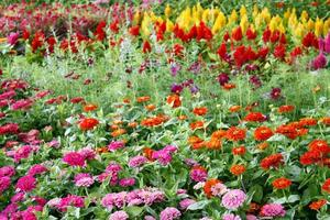 Bed of flowers photo