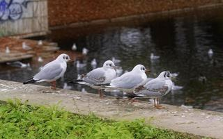 Four gulls standing and looking from concrete edge