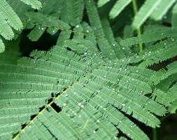 Green leaf with water droplet photo