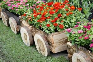 Flowers in wooden wagons photo