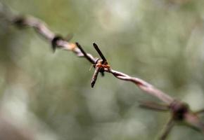 hormiga, en, viejo, oxidado, alambre de púas foto