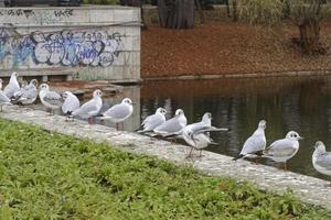 Group of gulls standing on concrete border