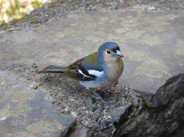 pájaro en el suelo foto