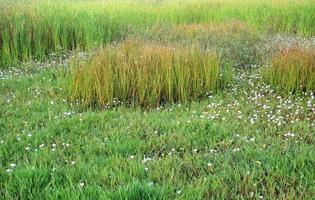 prados verdes, hierba verde de fondo foto
