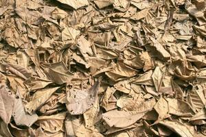 hojas secas para el fondo