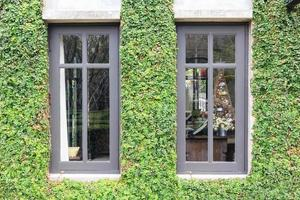 White window in house covered with green ivy and wood bench in green field. window covered with green ivy