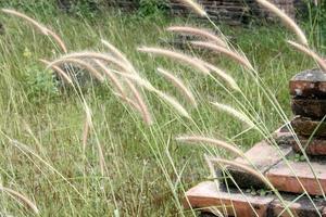 Grass near steps