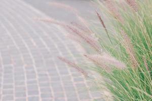 Grass and brick photo