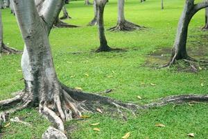 Tree trunks in grass