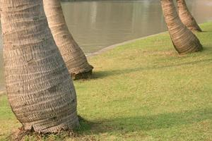 Leaning trees in park