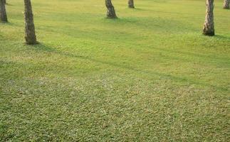 hierba verde relajante foto