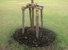 árbol de apuntalamiento del marco