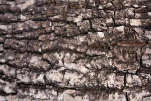 patrón de la madera foto