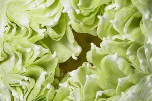 Green lotus petals