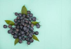Top view of the small sour blackish fruit sloes with leaves on a blue background with copy space