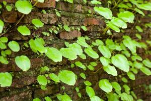 Leaves and old walls photo
