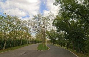 Autumn landscape with a road fork in the park