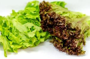 Red oak salad photo