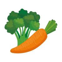 fresh vegetables, carrot and broccoli in white background vector