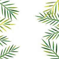 Marco de hojas naturales tropicales icono aislado
