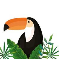 toucan with tropical leafs isolated icon vector