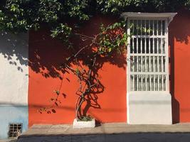 Cartagena, Colombia, 2020 - Tree against colorful building