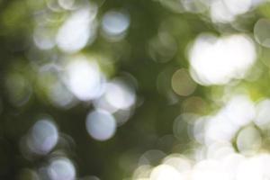 Green tree and light bokeh photo