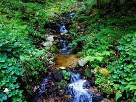 Little stream in the forest