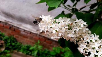 Bee near flowers