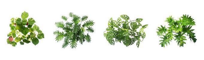 Green plants on white background photo