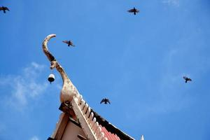 Roof, and birds