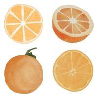 watercolor hand painted orange fruit slice illustration set vector