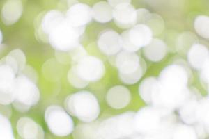 Green garden bokeh