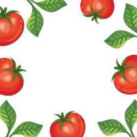 frame of fresh tomatoes and leafs vector