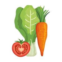 fresh tomato with chard and carrot vector
