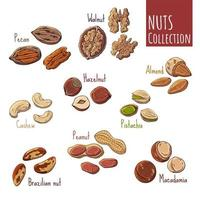 Group of vector illustrations on the nutrition theme set of different kinds of nuts. Realistic isolated objects for your design.