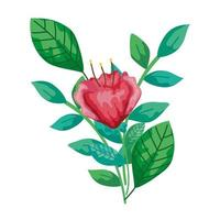 cute flower red with branch and leafs isolated icon vector