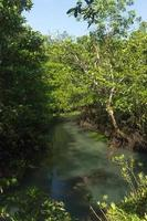 River and forest photo