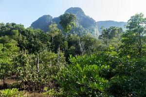 Mangroves, forest, and mountains with blue sky photo