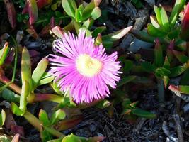 flor morada en el jardín foto