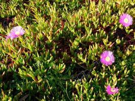 flores moradas en el jardin foto