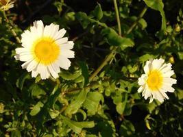 Yellow flowers in the outdoor garden