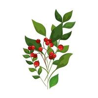 leafs and branches with seeds decoration christmas vector