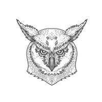 Head of Angry Great Horned Owl Tiger Owl or Hoot Owl vector