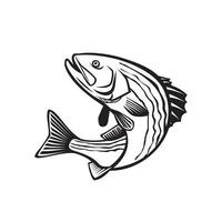 Striped Bass Morone Saxatilis, Atlantic Striped Bass vector