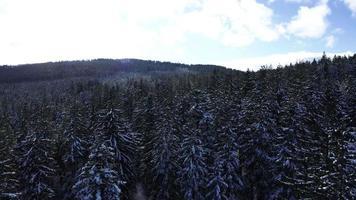 árvores nevadas em 4k
