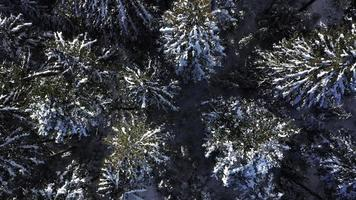 Aerial Top-Down View of Snowy Trees in 4 K video